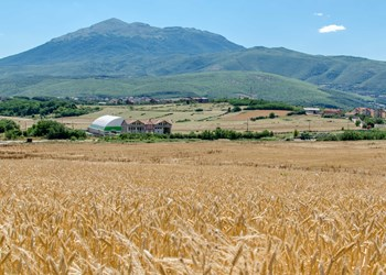 A field in Landovica, Kosovo that was cleared by a HALO Trust slider.