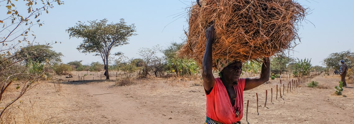 In the Mukumbura area beneficiary collects grass for thatching