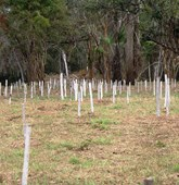 Northern Mozambique minefield cleared, HALO Trust.