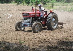 Beneficiary ploughing an area where HALO conducted mine clearance in Sri Lanka.