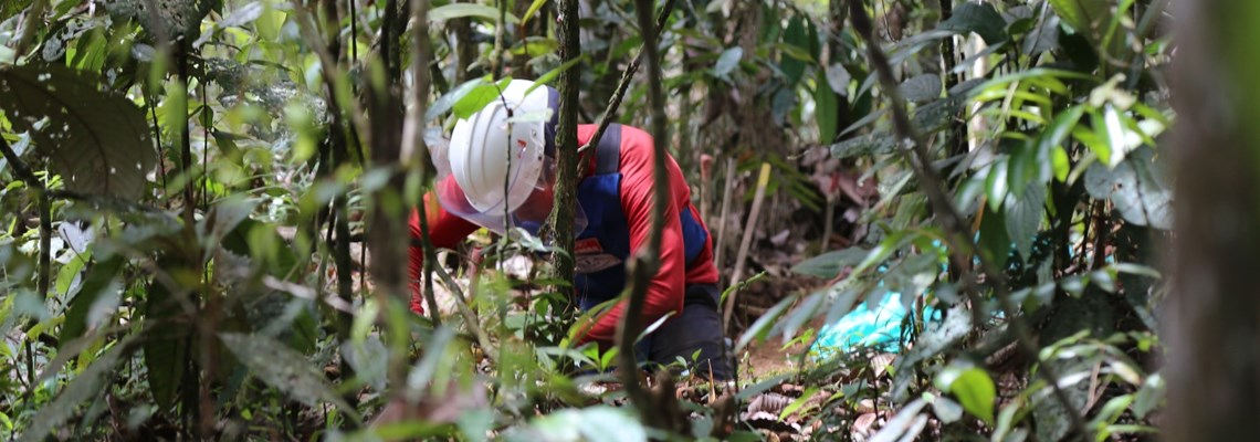 Manual mine clearance in Antioquia Colombia, HALO Trust.