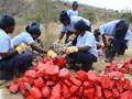 angola-100-women-in-demining-prepare-red-stones-for-marking-halo-trust.JPG